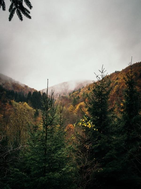 Der Nationalpark Harz