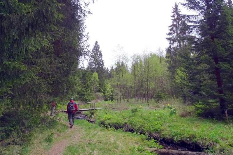 Wandern im Grumbachtal