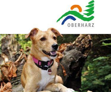 Urlaub mit Hund im Oberharz