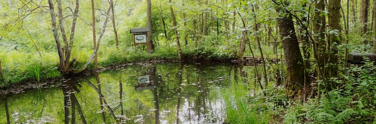 Biotop Waldtümpel Altenau