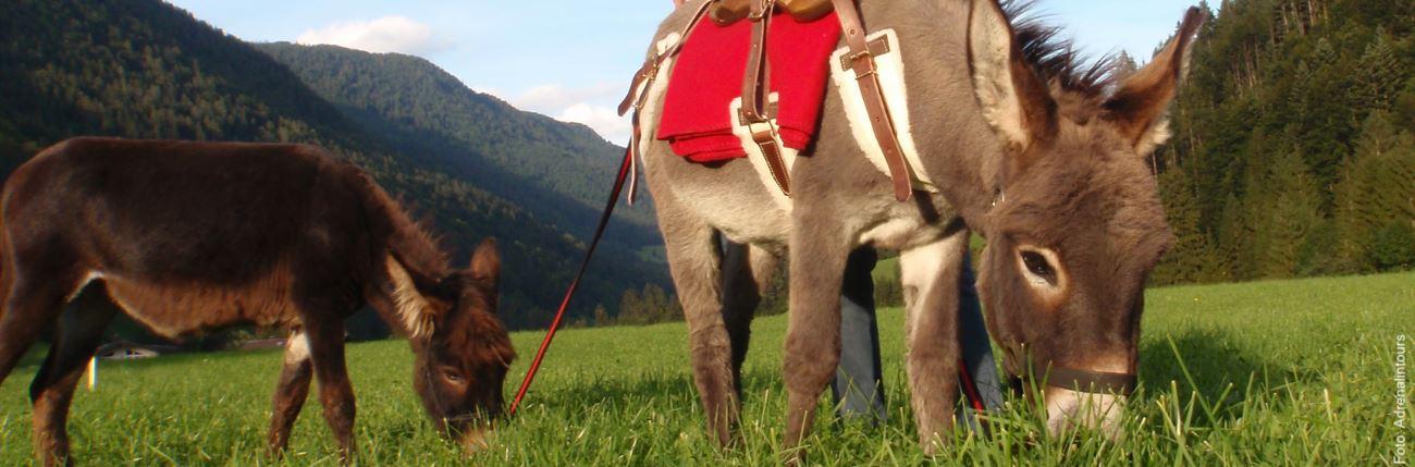 Eselwanderungen im Harz