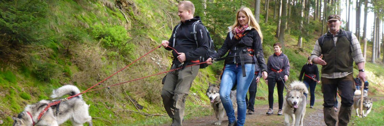 Huskywanderungen im Harz