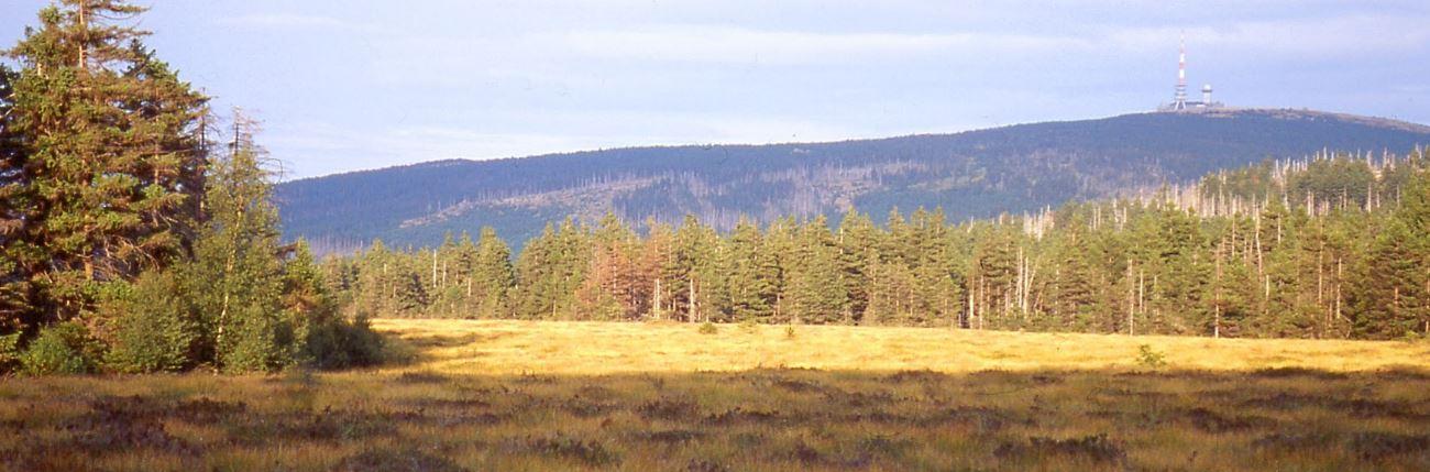 Wanderung rund um das Torfhaus Moor