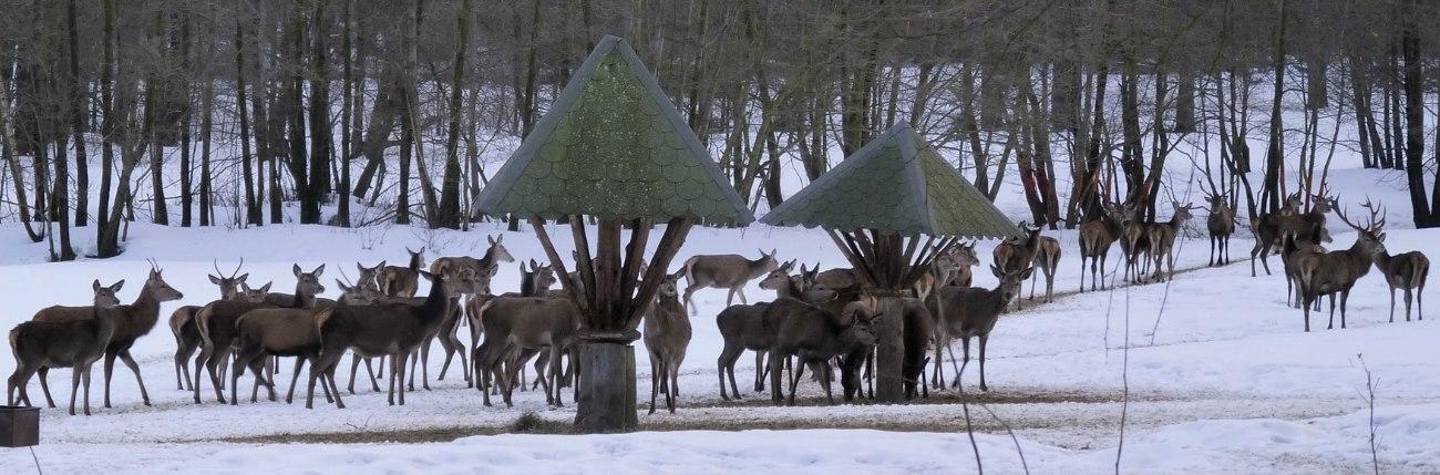 Wildtierfütterung im Harz