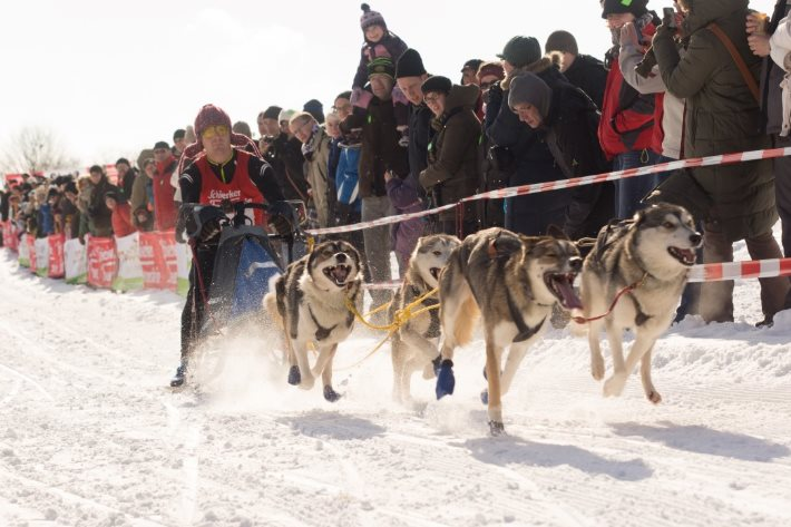Oberharzer Schlittenhunde Adventure